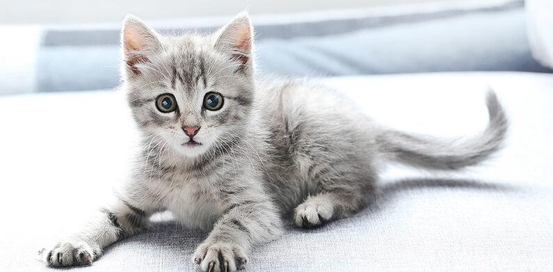 3 aylık kedi ne yer