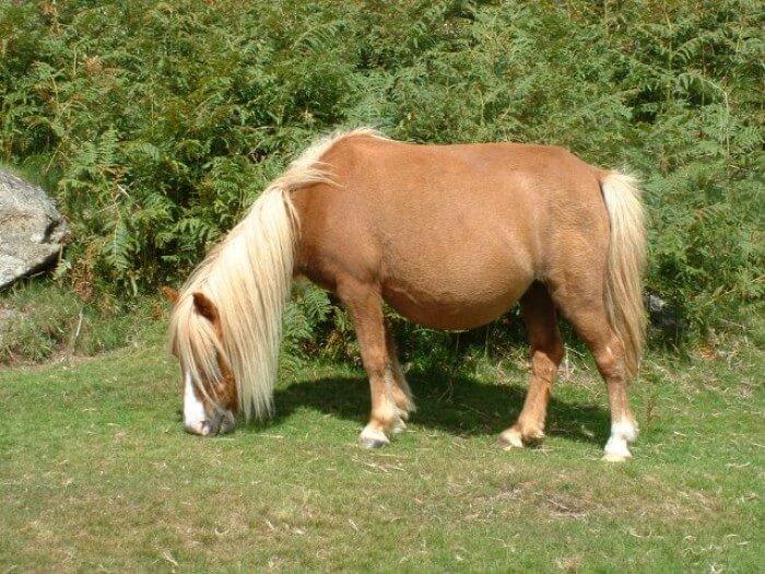 Pony At Çiftliği Kurmak